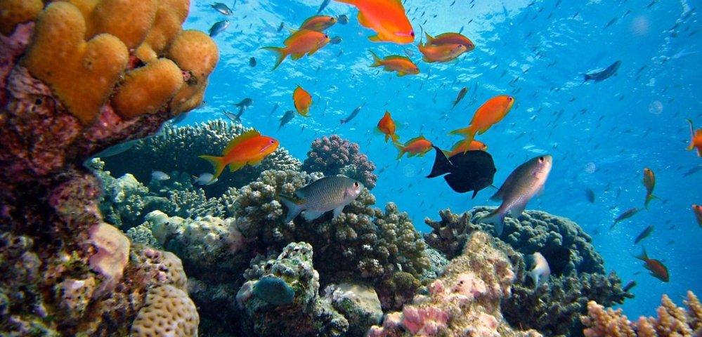 Unterwasserwelt genießen mit Schnorchelmaske